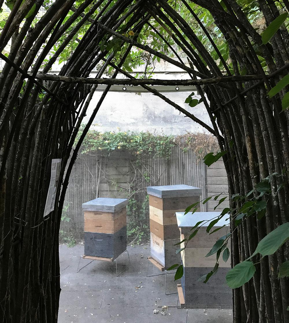 2 - Atelier d'initation à l'apiculture engagée