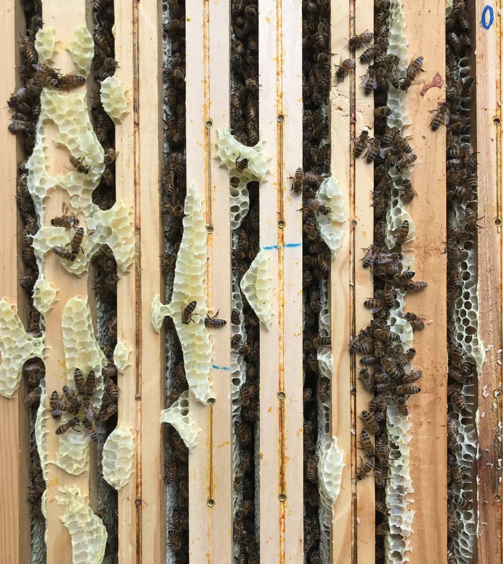3 - Atelier d'initation à l'apiculture engagée