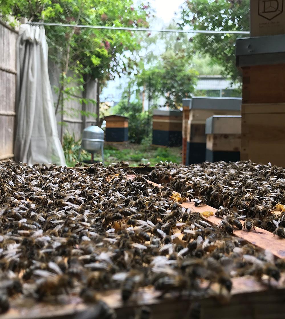 7 - Atelier d'initiation à l'apiculture engagée