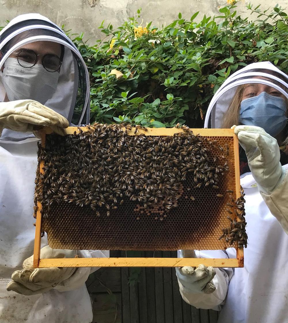 8 - Atelier d'initiation à l'apiculture engagée