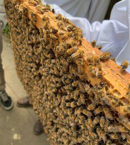 atelier-initiation-apiculture-villette2